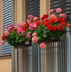 Decoracion con flores en Úbeda
